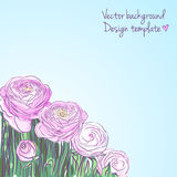 Illustration with blooming ranunculus Royalty Free Stock Image