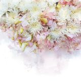 Illustration of blossom flower. Illustration of blossom white chrysanthemum flower and pink orchid. Artistic floral abstract background. Watercolor painting Royalty Free Stock Photos