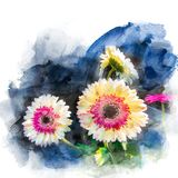 Illustration of blossom gerbera. Illustration of blossom white yellow and pink gerbera. Artistic floral abstract background. Watercolor painting retouch Royalty Free Stock Images