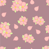 Seamless pattern. Blossoming cherry Royalty Free Stock Image