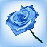 Illustration of blue frozen rose on a blue background. Made in EPS 10 Stock Images