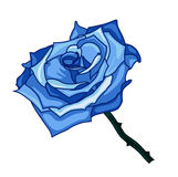 Illustration of blue rose. On a white background Royalty Free Stock Photo