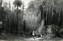 Illustration boisée pionnière de dégagement occidentale de paysage illustration stock