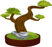 Illustration bonsai. On white background Royalty Free Stock Photo