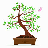 Illustration of a bonsai tree. Vector illustration of bonsai tree on a white background Royalty Free Stock Images