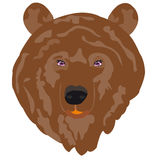 Illustration borax bear Royalty Free Stock Photography