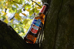Illustration bottles of non alcoholic beer in nature of a tree Stock Image