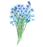 An illustration with a bouquet of the beautiful watercolor blue forget-me-not flowers (Myosotis) Royalty Free Stock Photo