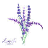 An illustration with a bouquet of the beautiful watercolor lavender branches, hand-drawn in a watercolor Stock Image
