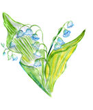 Illustration bouquet of fresh lilies of the valley with green leaves. On a white background Royalty Free Stock Photography
