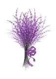 Illustration of  bouquet  lavender with  lilac festive ribbon isolated on white background. Illustration of  bouquet  lavender with  lilac festive ribbon Stock Images