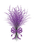 Illustration of  bouquet  lavender with  lilac festive ribbon isolated on white background. Illustration of  bouquet  lavender with  lilac festive ribbon Royalty Free Stock Photos
