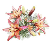 Illustration of bouquet of lilies Stock Images