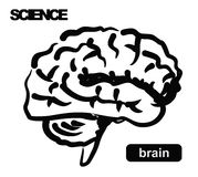 Illustration of brain Stock Image