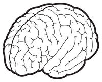 Illustration of a brain. Black and white vector illustration of a brain Royalty Free Stock Photo