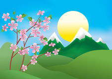 illustration with branches of peach - vector Royalty Free Stock Image