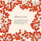 Illustration with branches of rowan berry Stock Photo