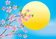 Illustration with branches and sun - vector Royalty Free Stock Photos