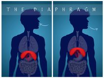 Breathe with the diaphragm. Illustration of breathe with the diaphragm Royalty Free Stock Photos