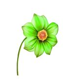 Illustration of Bright colorful Dahlia flower Stock Photo