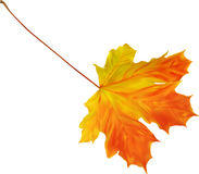 Illustration with bright golden maple leaf Royalty Free Stock Photography