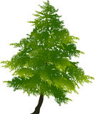 Illustration with bright green fir. Illustration with green fir isolated on white background Stock Image