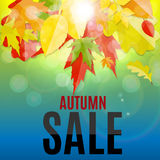 Illustration brillante d'Autumn Leaves Sale Background Vector Photographie stock
