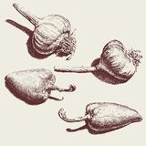 Illustration with a brown garlic and pepper Royalty Free Stock Photos