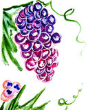 Illustration of bunches of grapes, berries Royalty Free Stock Images