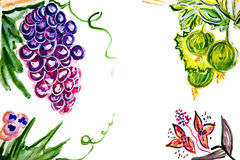 Illustration of bunches of grapes, gooseberries, berries Stock Photography