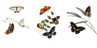 Illustration of butterflies and plants. Public domain. An epitome of the natural history of the insects of China. Bensley, 1798 Royalty Free Stock Photo