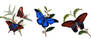 Illustration of butterflies and plants. Public domain. An epitome of the natural history of the insects of China. Bensley, 1798 Stock Image