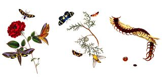 Illustration of butterflies and plants. Public domain. An epitome of the natural history of the insects of China. Bensley, 1798 Stock Photo