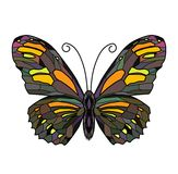 Illustration of Butterfly. On white background Stock Photos