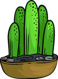 Illustration cactus. On white background Royalty Free Stock Photography
