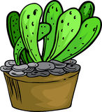 Illustration cactus. On white background Stock Photos