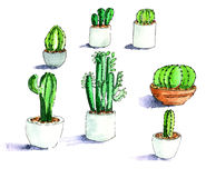 Illustration cactuses Royalty Free Stock Images