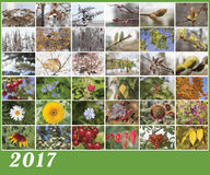 Illustration of calendar for 2017. A collage of flowers and plants in different seasons of the year royalty free stock photos