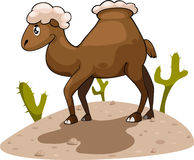 Illustration camel vector Royalty Free Stock Image