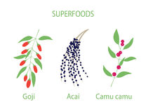 Illustration of camu camu, goji and acai Royalty Free Stock Photo