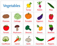 Illustration - cards with Vegetables Royalty Free Stock Photos
