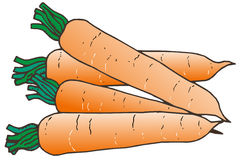 Illustration of a carrot royalty free illustration