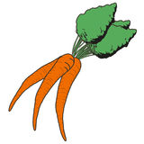 Illustration of a carrot Royalty Free Stock Images