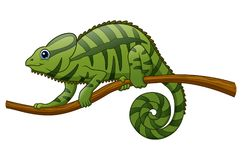Cartoon chameleon on a branch Royalty Free Stock Photos