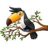Cartoon funny toucan on a tree branch. Illustration of Cartoon funny toucan on a tree branch Royalty Free Stock Photography