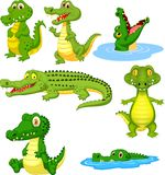 Cartoon green crocodile collection set vector illustration