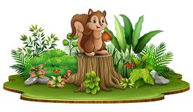 Cartoon happy squirrel holding pine cone and standing on tree stump with green plants vector illustration