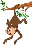Cartoon monkey hanging on the tree branch with his tail. Illustration of Cartoon monkey hanging on the tree branch with his tail stock illustration