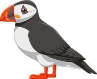 Cartoon puffin isolated on white background. Illustration of Cartoon puffin isolated on white background Stock Photos
