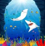 Cartoon shark under the sea. Illustration of Cartoon shark under the sea Stock Images